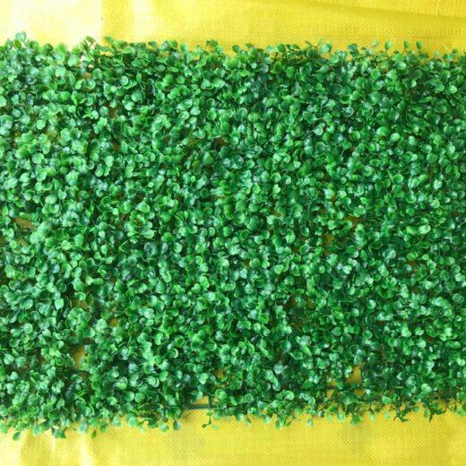 Vỉ cỏ cải xoong trang trí