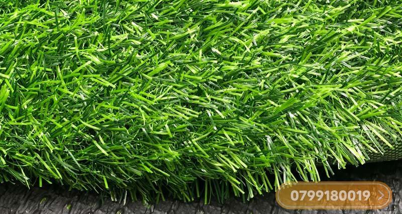 Thảm cỏ nhân tạo 2cm cao cấp